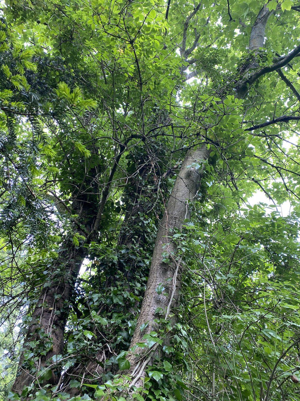 Konsequenter Baumschutz nur mit Baumschutzsatzung – GRÜNE sammeln Unterschriften auf dem Markt
