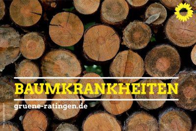 Grüne Ratingen fragen nach Baumkrankheiten und Schädlingen wie Bockkäfer und Kupferstecher